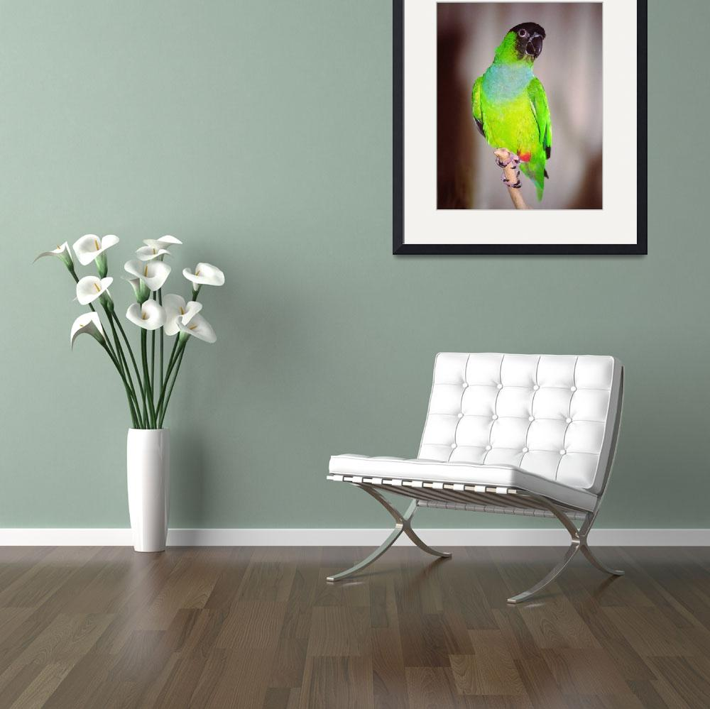 """""""Nanday Conure&quot  (2007) by buffaloworks"""