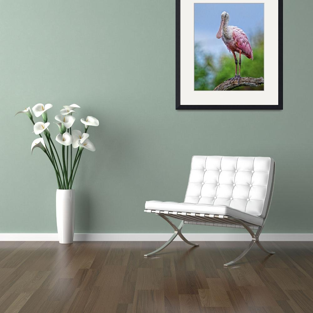 """""""Roseate Spoonbill&quot  (2016) by MatthewLermanPhotography"""