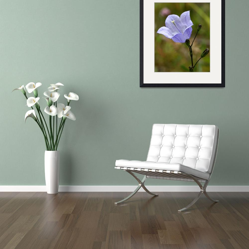 """""""Harebell&quot  (2008) by roger"""