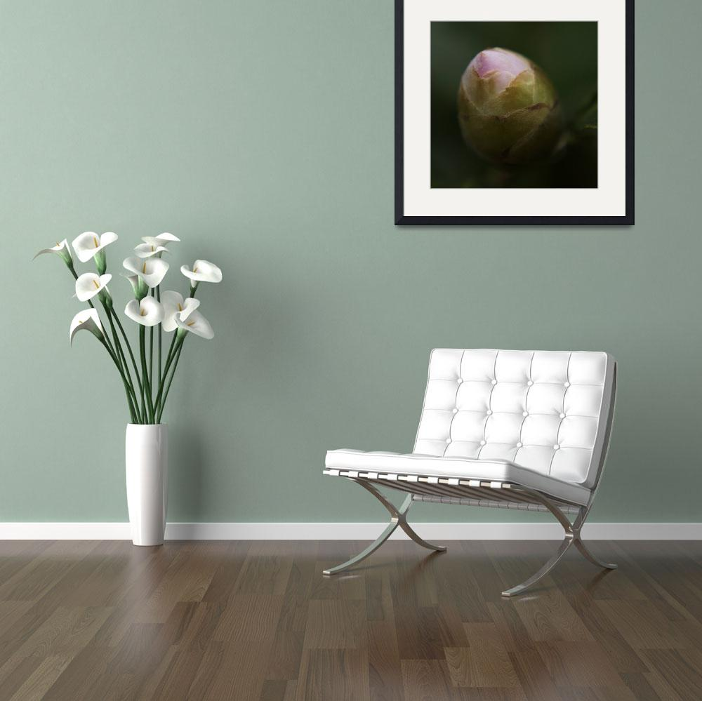 """""""Camelia Bud&quot  by Mike_Bartley"""
