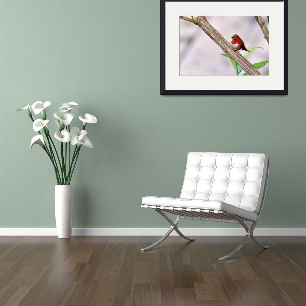 """""""Male Rufous Resting II&quot  (2012) by LauraM"""