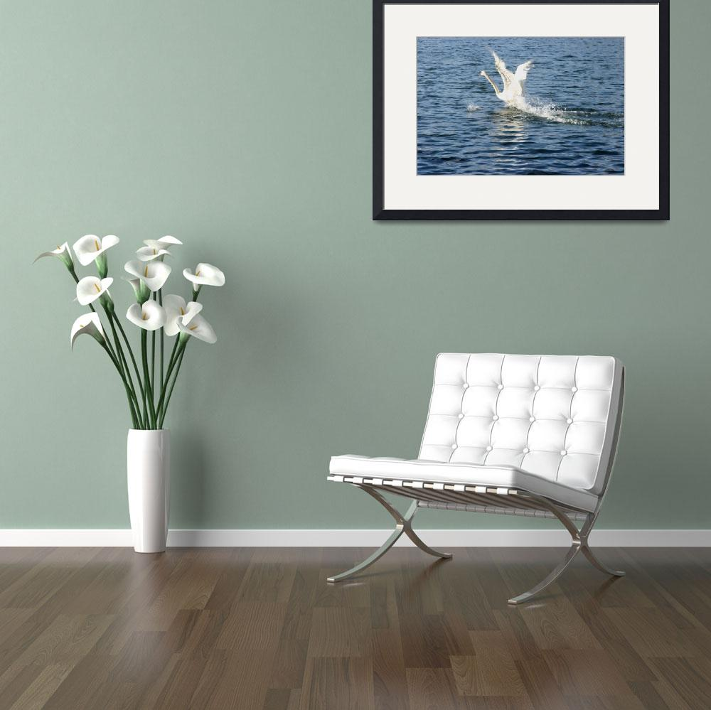 """""""swan take-off""""  (2009) by athompson"""