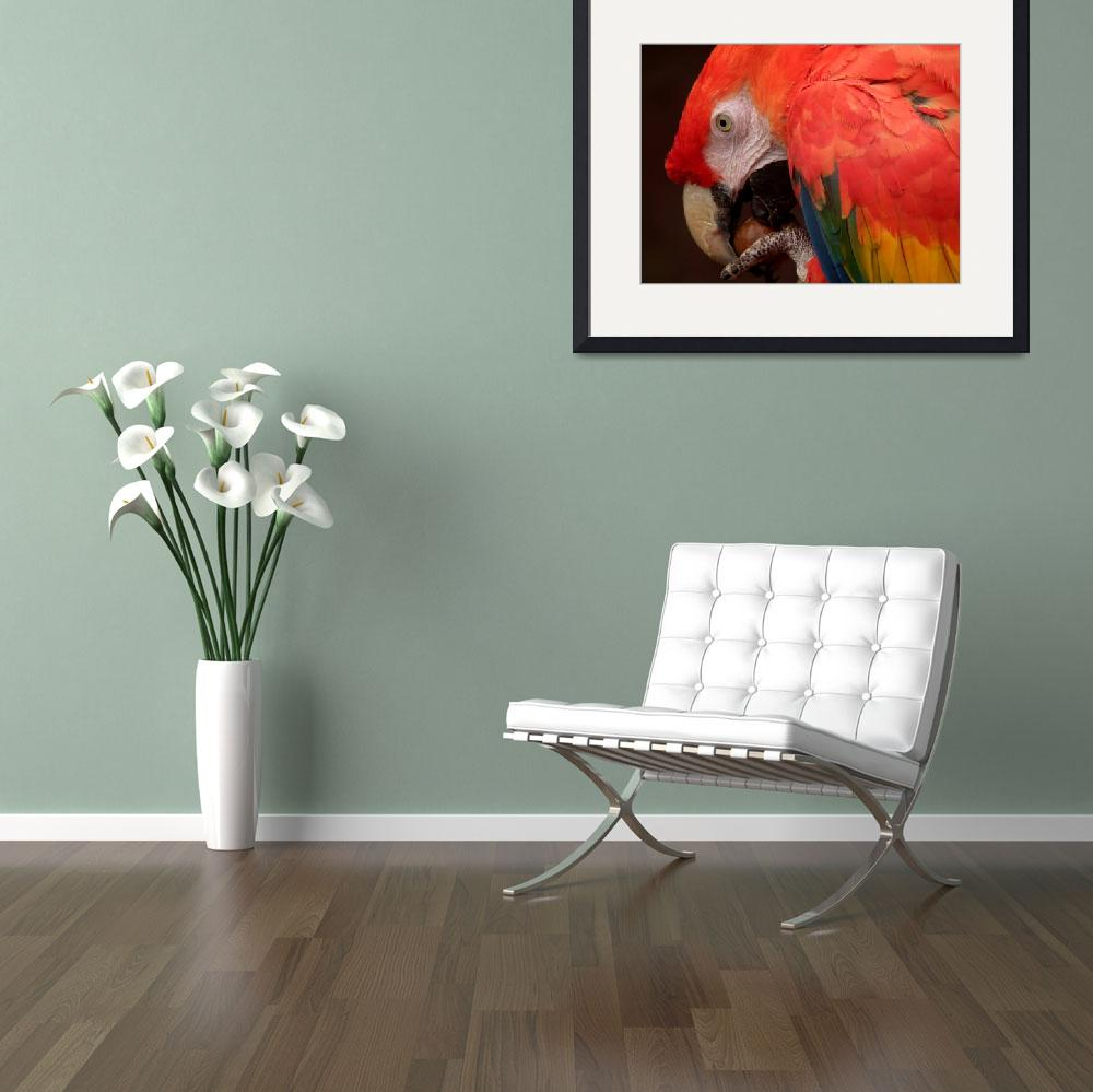 """""""Parrot & The Pea&quot  by JamesBWells"""