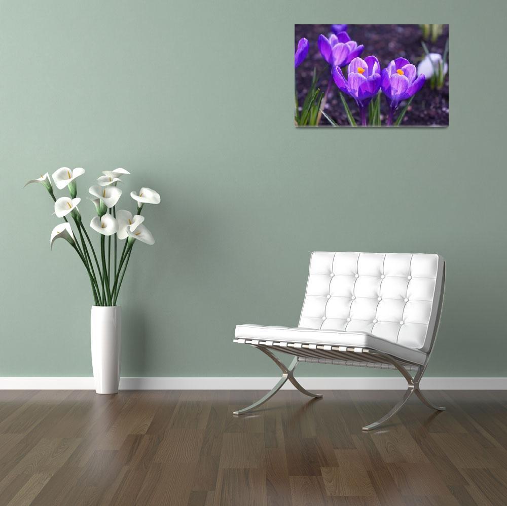 """Purple Crocus Flowers Spring Gardens Floral""  (2014) by BasleeTroutman"
