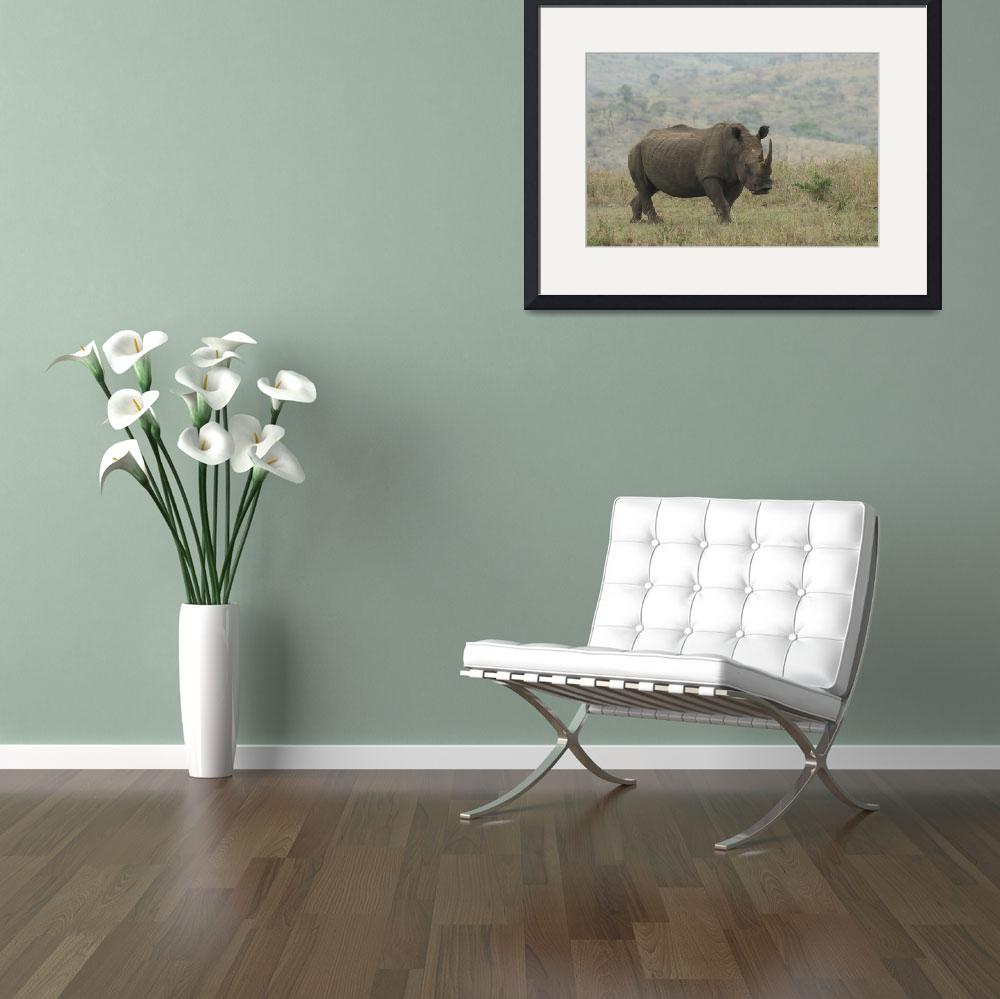 """""""Curious White Rhino&quot  (2009) by JonathanCJPhoto"""