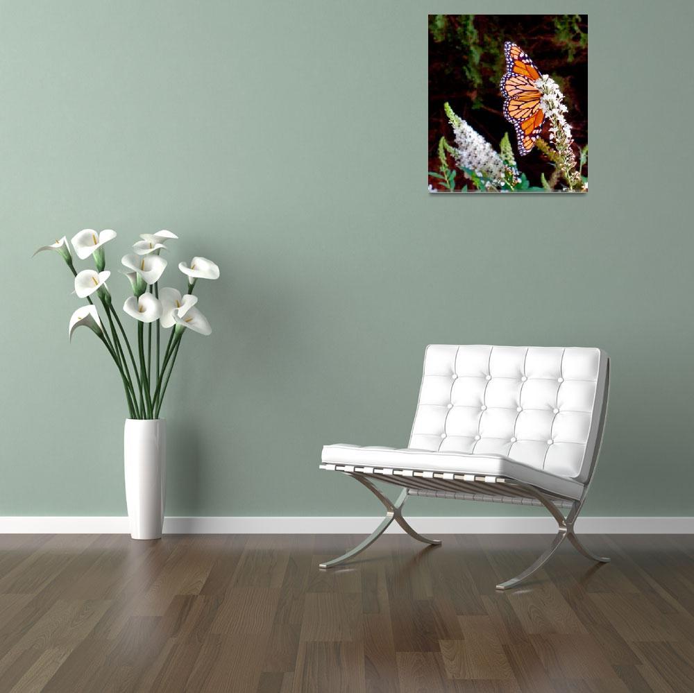 """Very Confident Monarch Butterfly""  (2010) by MichaelKarasik"