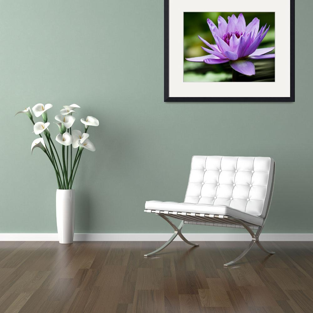 """""""Purple Water Lily&quot  (2011) by PhotographsByCarolFAustin"""