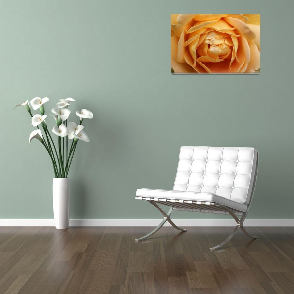 """""""Rose""""  by andrewclassen"""