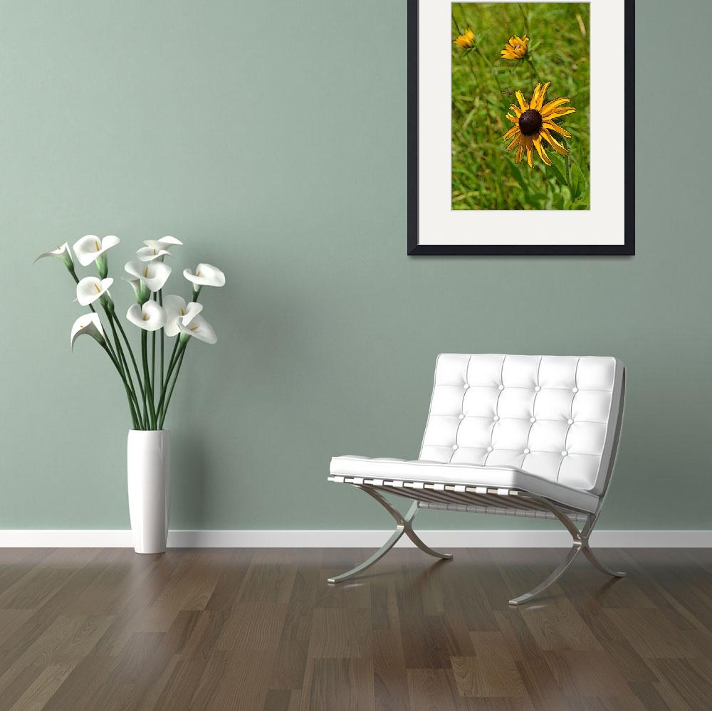 """""""Bee on Black Eyed Susan&quot  by jodipflepsen"""