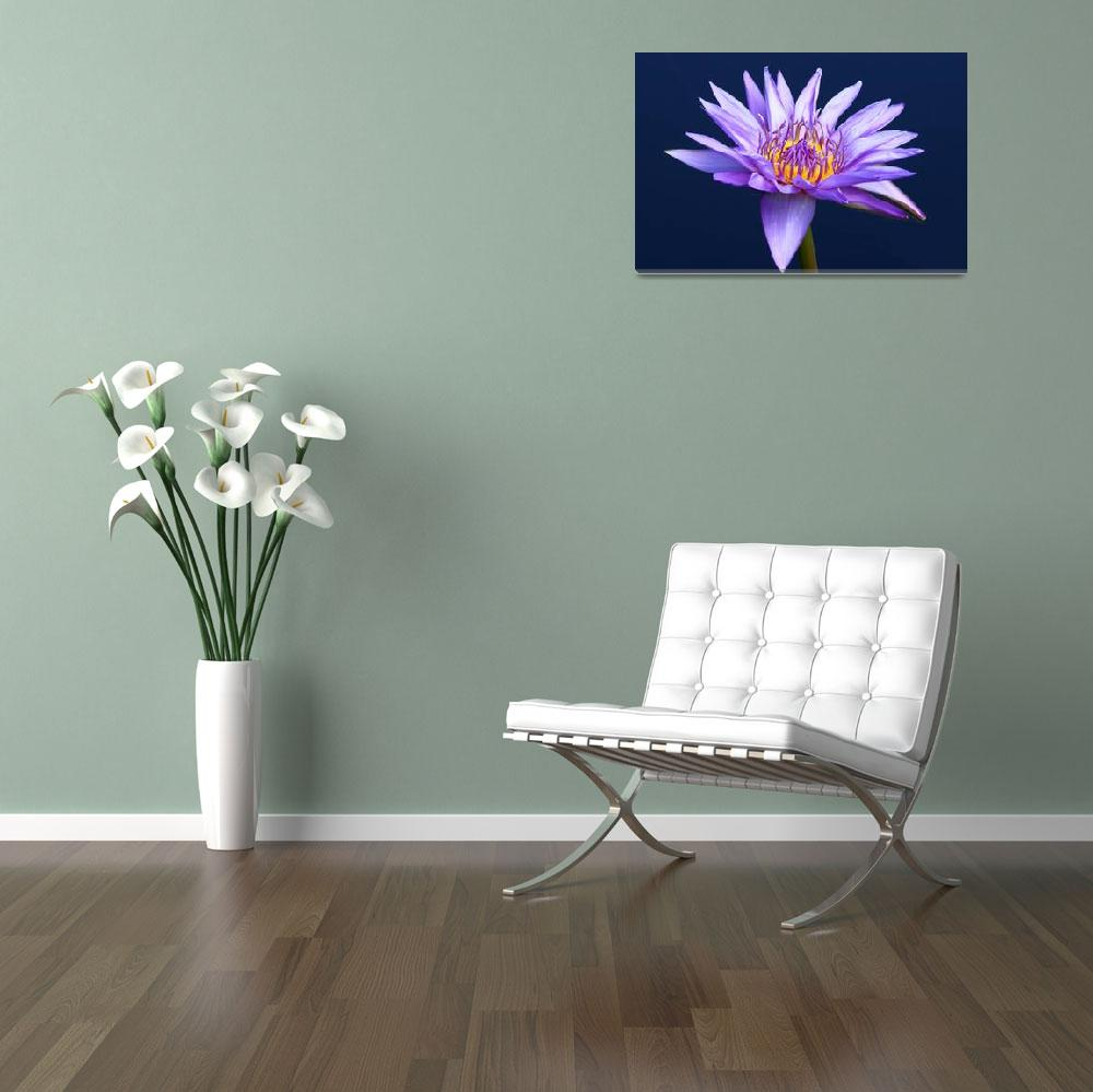 """Lavender Water Lily&quot  (2009) by FordLou"