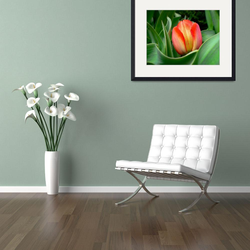 """""""Close-up of Young Red Tulip Flower w/ Green Leaves""""  by Chantal"""