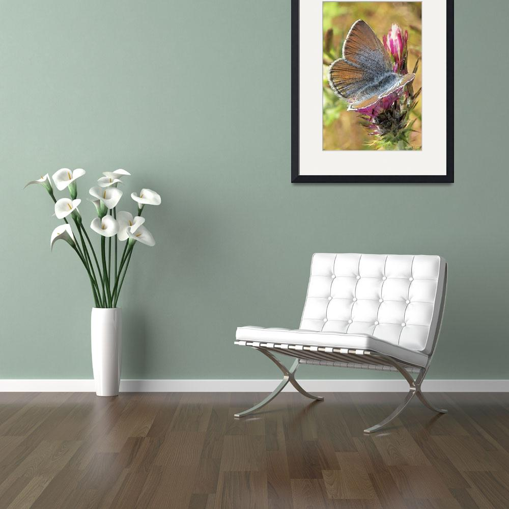 """""""Butterfly Love Collection (3 of 7)&quot  (2012) by WallArtDeco"""