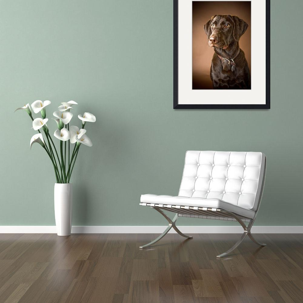 """Chocolate Labrador Retriever&quot  by DesignPics"
