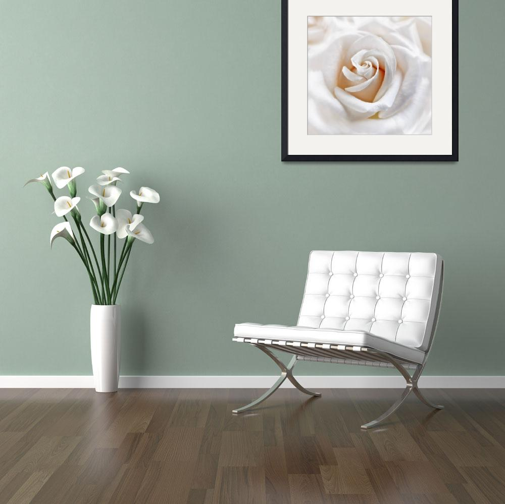 """""""Apricot White Rose""""  (2011) by CoraNiele"""