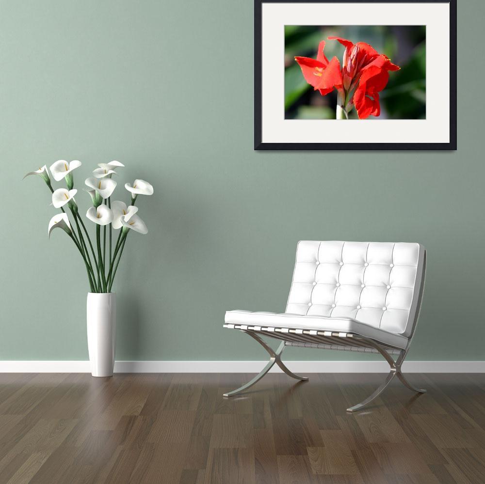 """""""Red Iris&quot  (2006) by MNTPhoto"""