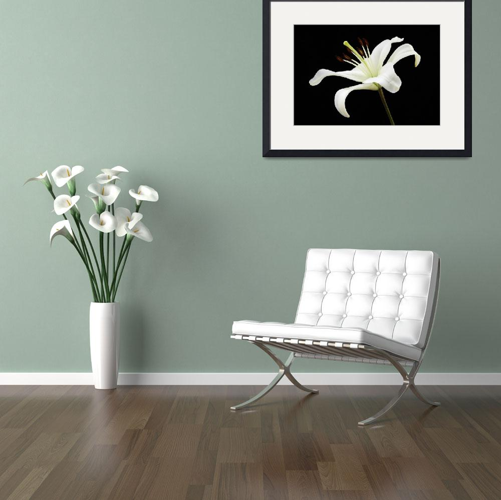 """""""Peruvian Lily&quot  by ProArtWork"""