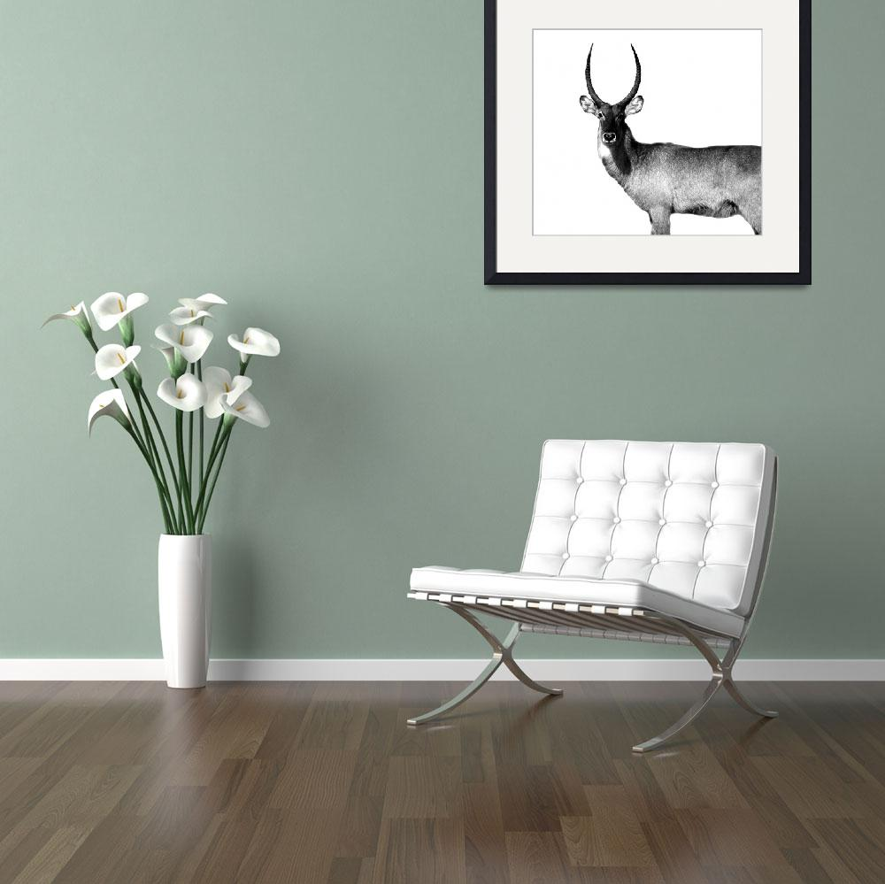 """Waterbuck&quot  (2010) by AndrewSyrett"
