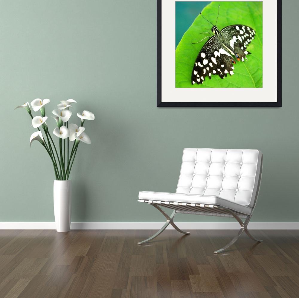 """""""BFP 2014 - Black and White Spotted Butterfly&quot  by scubagirlamy"""