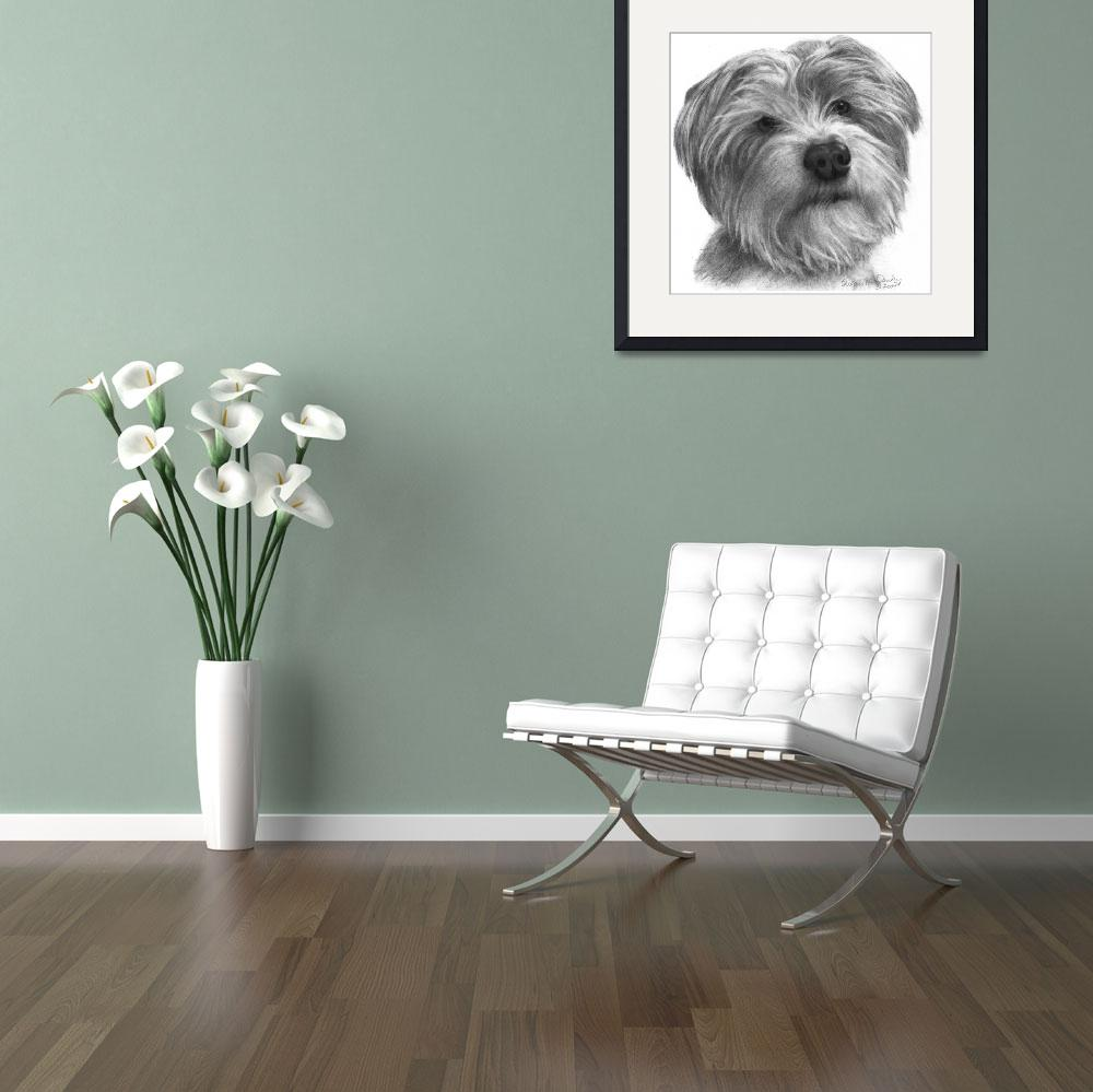 """""""Biscuit, Terrier-Shih Tzu Mixed Breed&quot  (2007) by sdonley"""