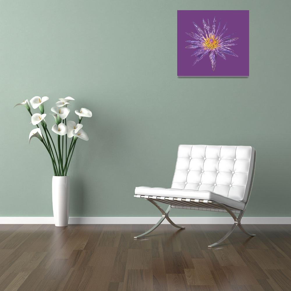 """""""Purple Water Lily Sketch""""  (2010) by AMKPhotography"""
