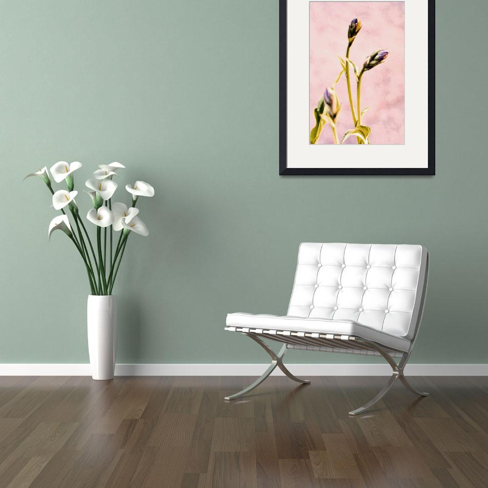 """Hosta Buds""  (2009) by bavosiphotoart"