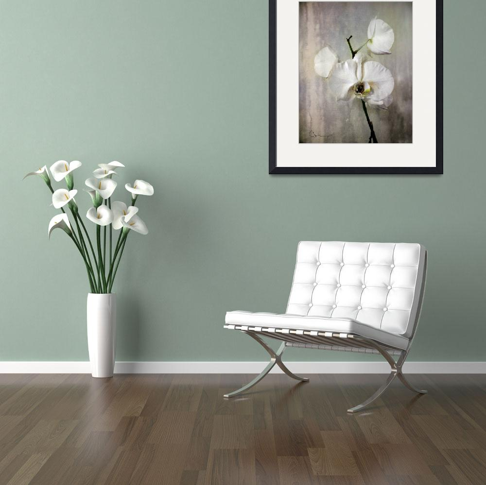 """""""Silver Orchid&quot  by ellsworth"""