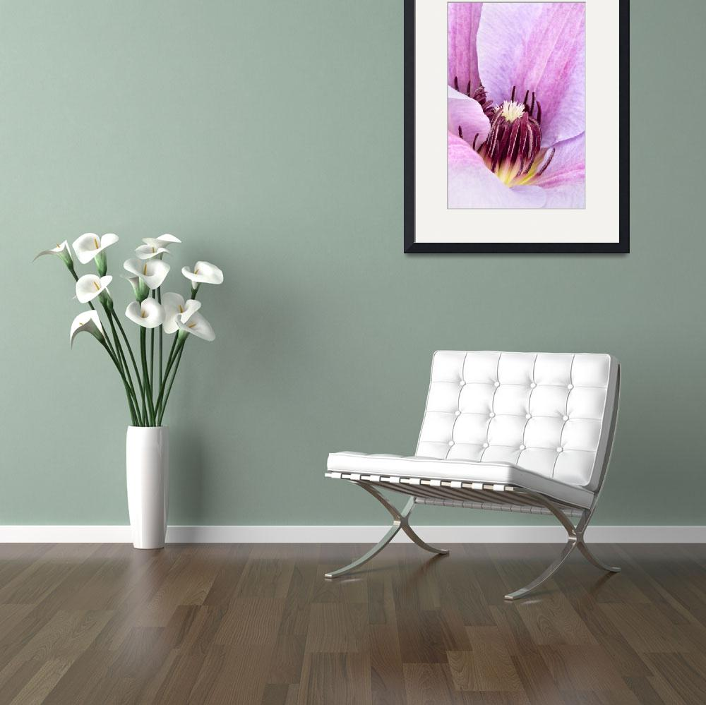 """""""Lilac Purple Clematis Print&quot  (2009) by NatalieKinnear"""