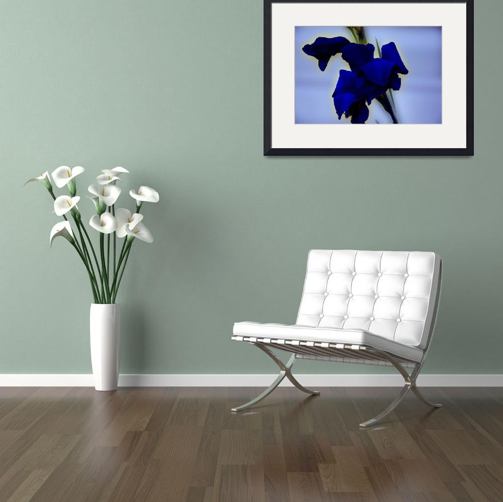 """""""Blue Gladiolus&quot  (2009) by RTMacGowan"""