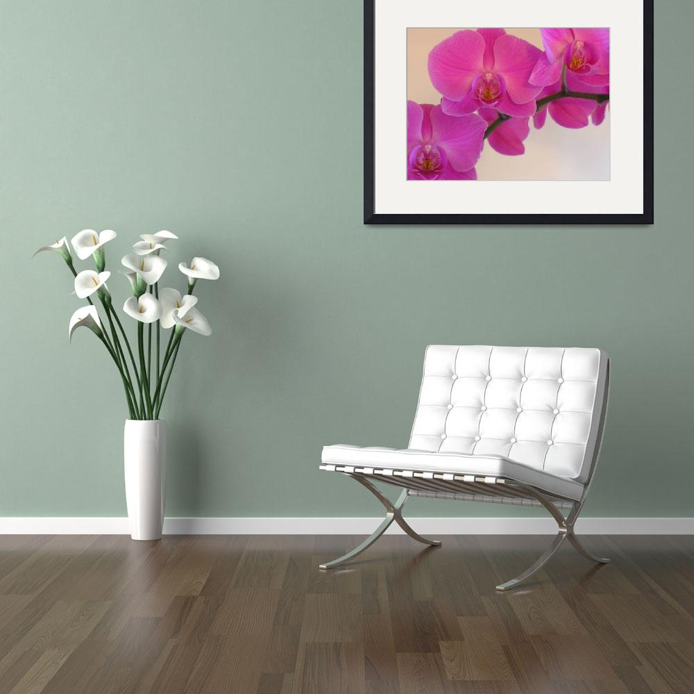 """Pink Orchid""  (2008) by SnapitNow"