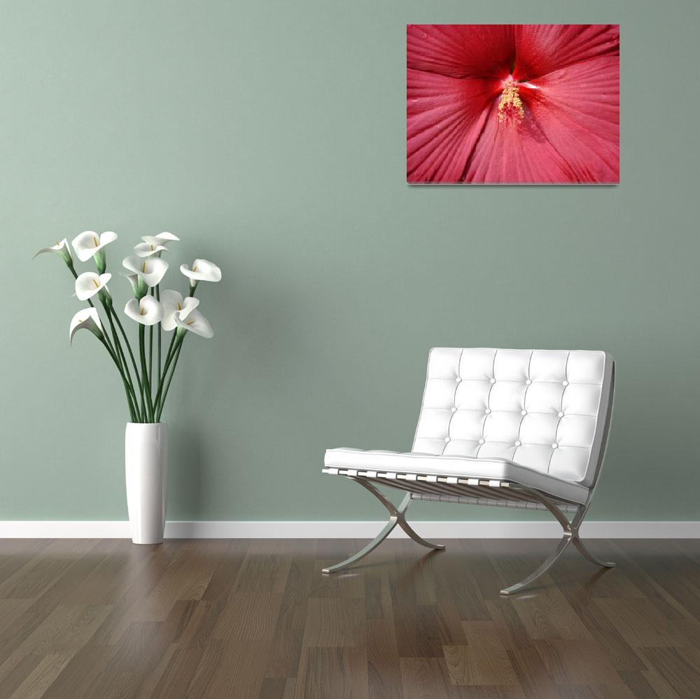 """""""XCU Red Flower&quot  by TheCalhounPictureShow"""