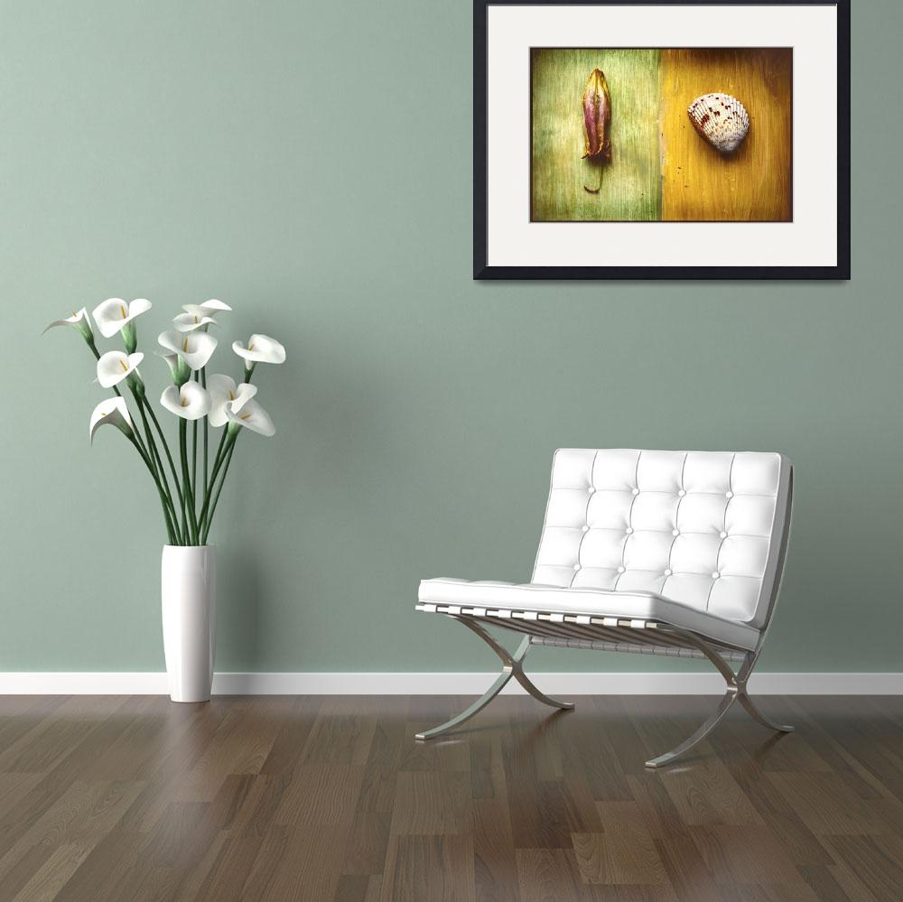 """""""lily and shell collage&quot  (2009) by eyecontact"""