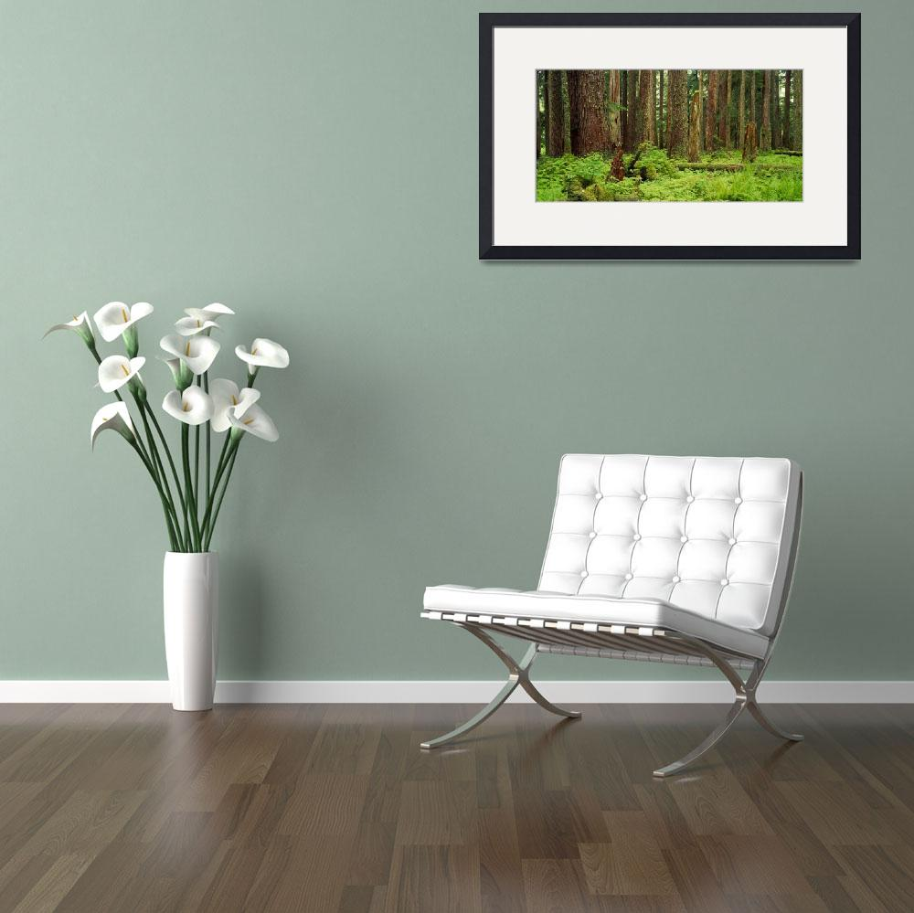 """""""Forest floor Olympic National Park WA&quot  by Panoramic_Images"""