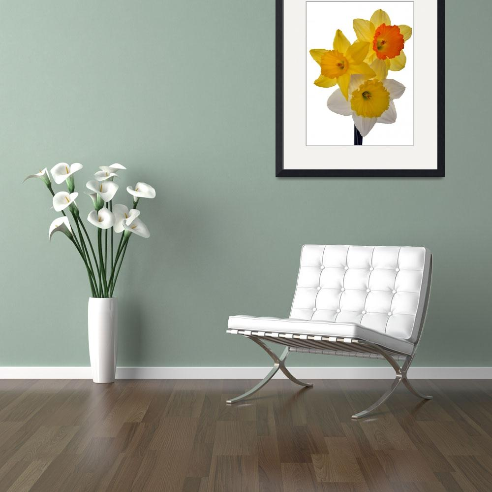 """Spring Trio floralart by terencedavis&quot  (2012) by terencedavis"
