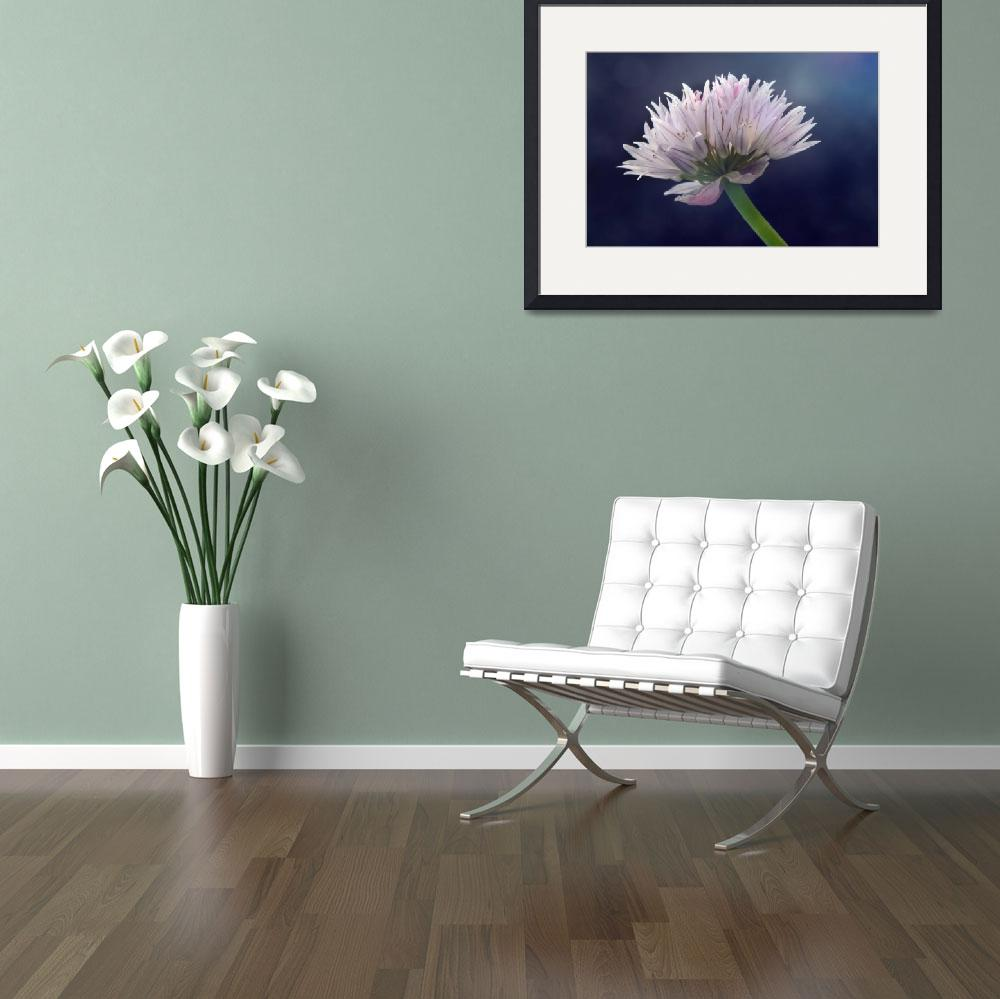 """""""Chive&quot  (2013) by sarahc"""