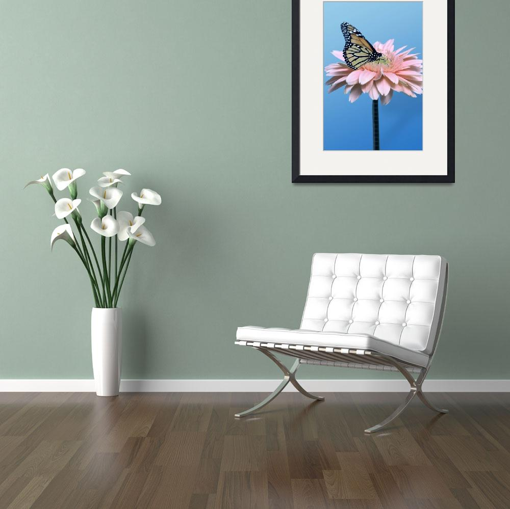 """Gerbera Daisy and Butterfly&quot  by roim"