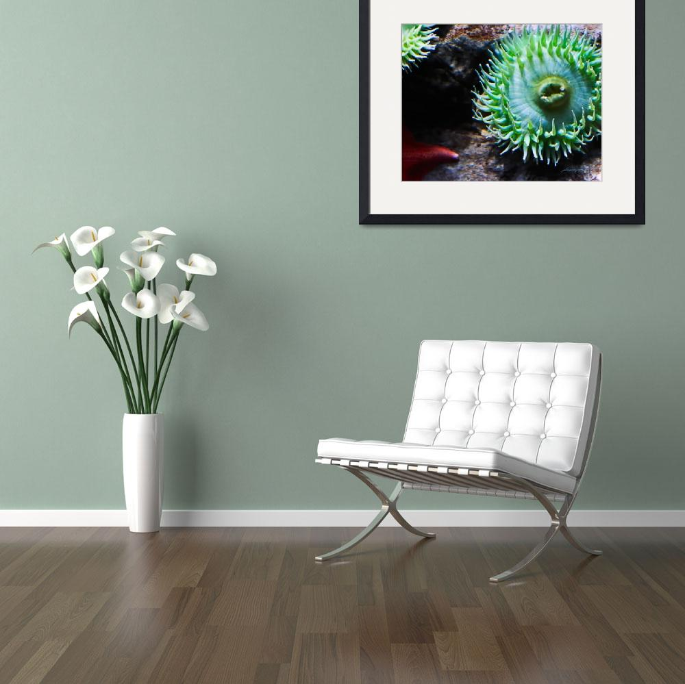 """""""Green Sea Anemone and Red Starfish&quot  (2010) by johncorney"""