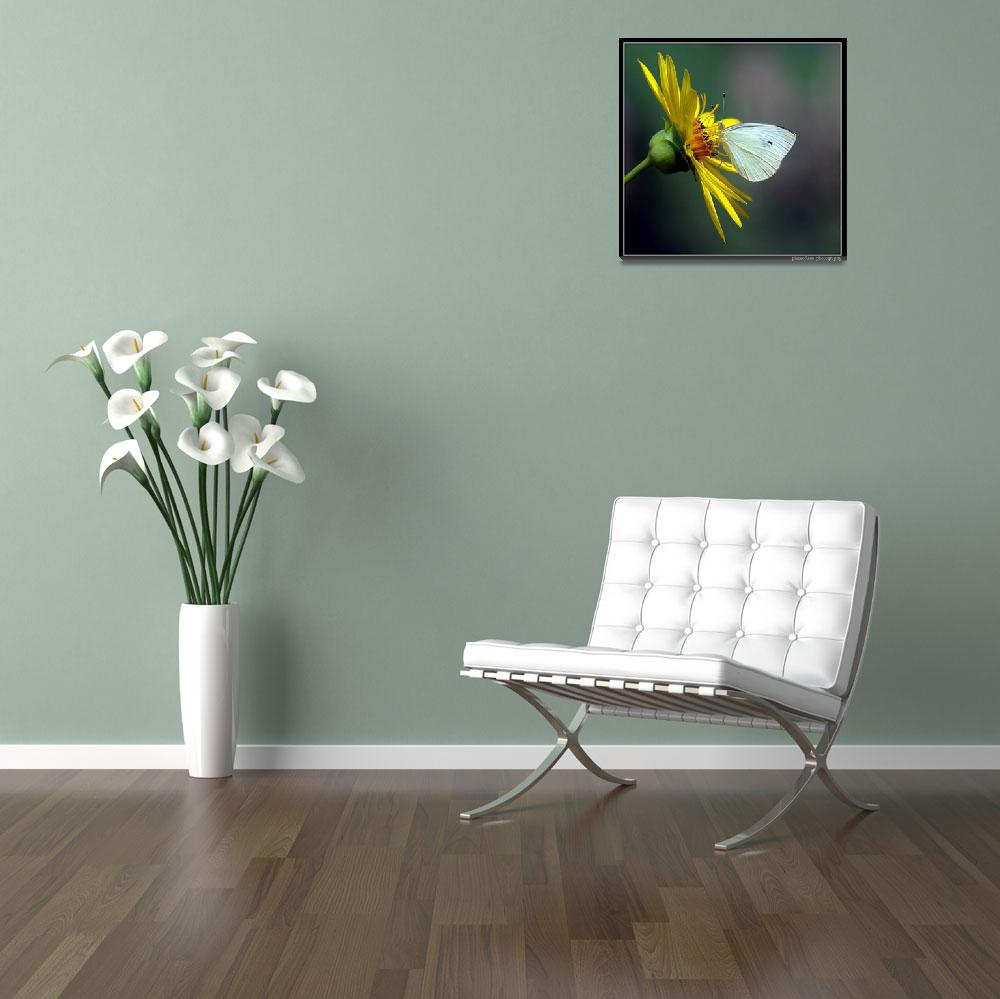"""""""Cabbage White on Rosinweed...""""  (2008) by pieceoflace"""