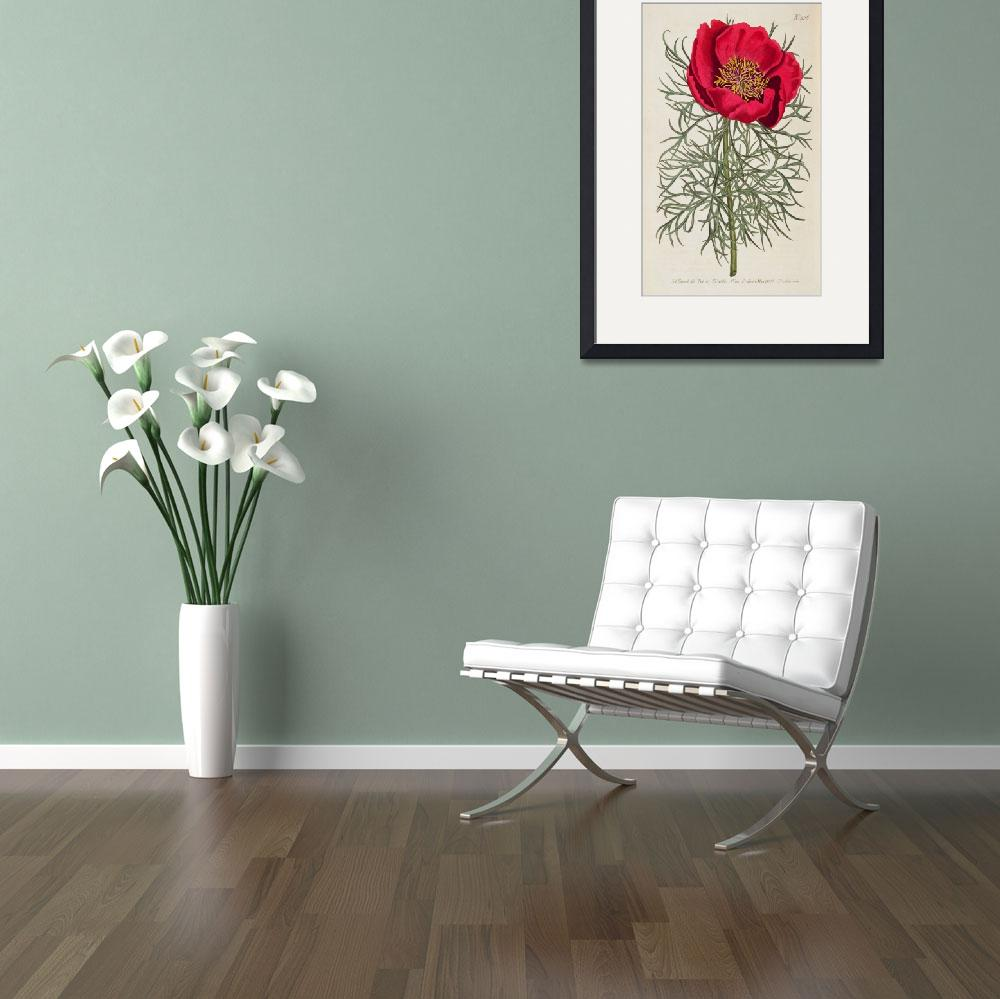 """""""Peony: Paeonia Tennifolia by William Curtis&quot  by fineartmasters"""