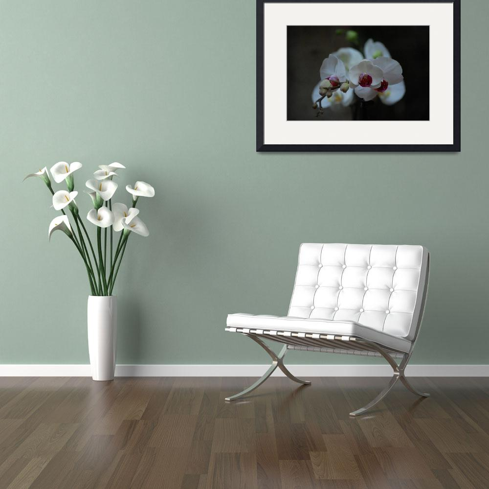 """""""Orchids&quot  (2008) by sharriger"""