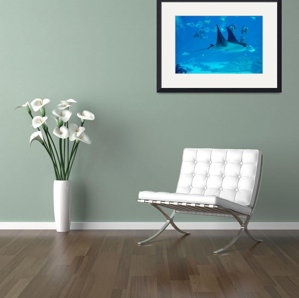 """""""Manta ray floating underwater among other fish&quot  by digidreamgrafix"""