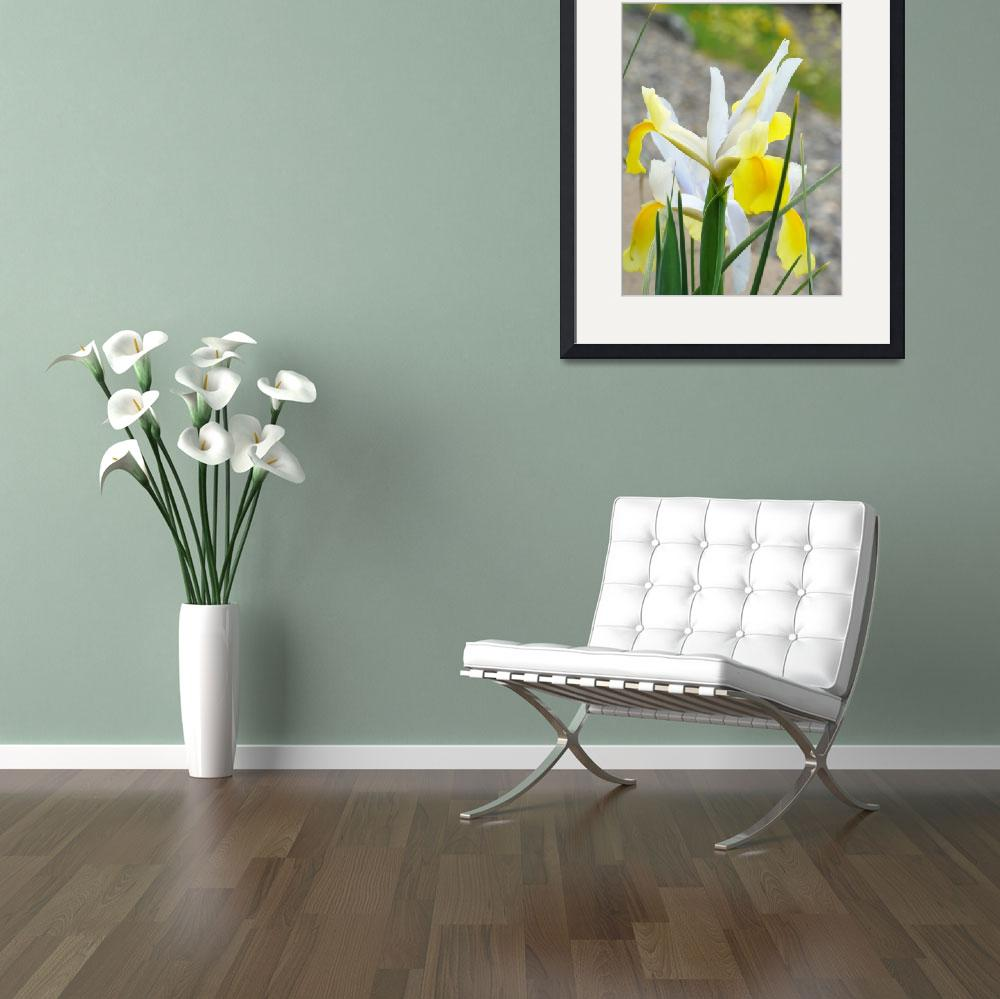 """Irises Yellow IRIS FLOWERS Spring Garden Art""  (2009) by BasleeTroutman"