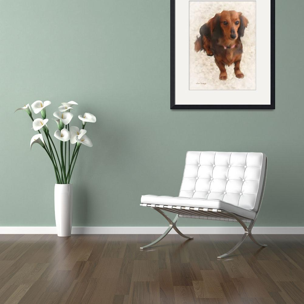 """SWEET DACHSHUND&quot  (2013) by shaynaphotography"