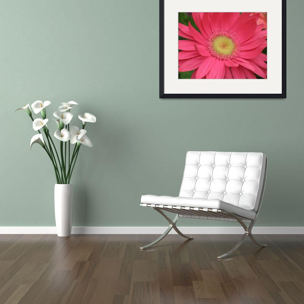 """Crazy Over Daisy (Pink Gerbera)&quot  (2004) by CRS"