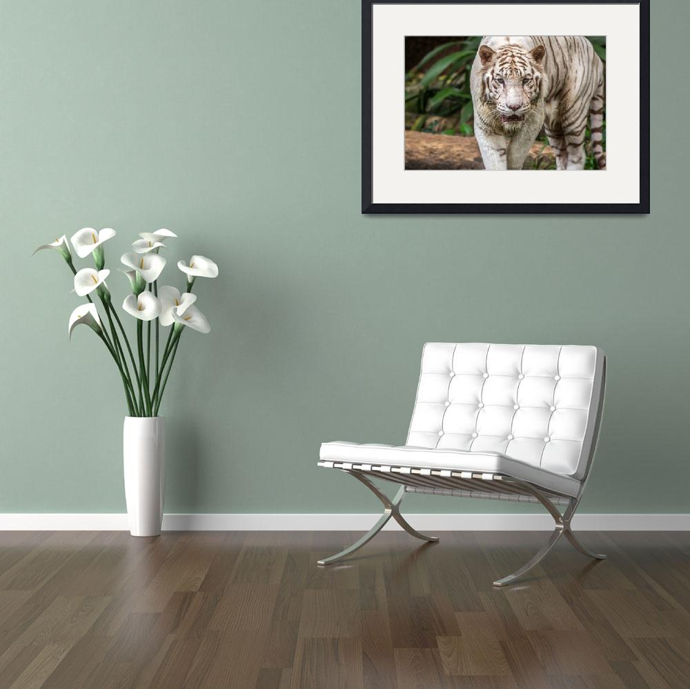 """""""White Tiger&quot  (2014) by mjphoto-graphics"""