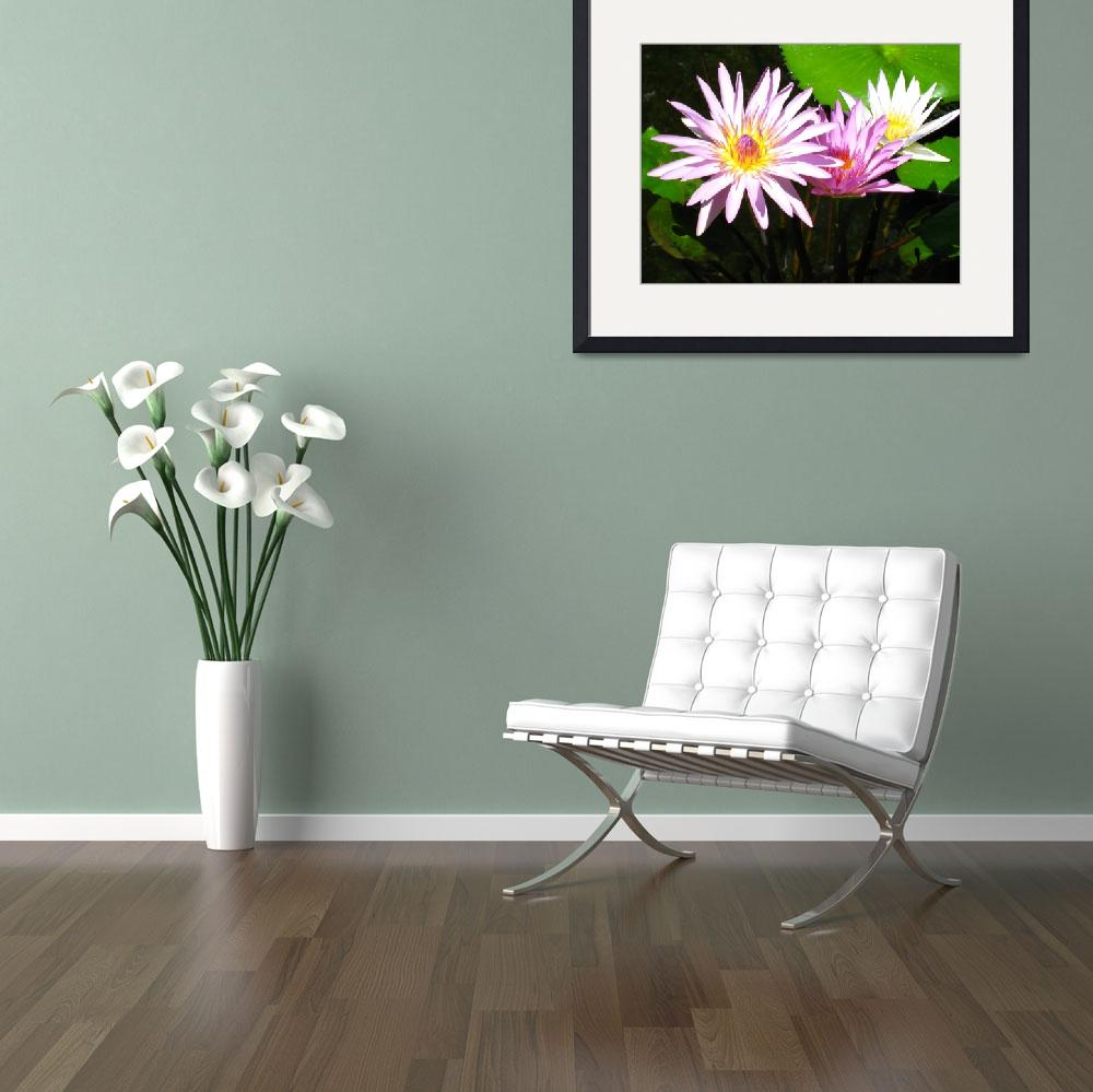 """""""Pink Water Lilies""""  (2008) by AMKPhotography"""