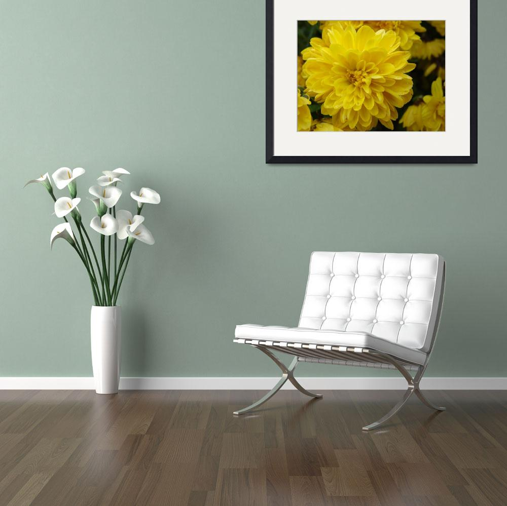 """""""Yellow Mum&quot  (2009) by shanblan"""