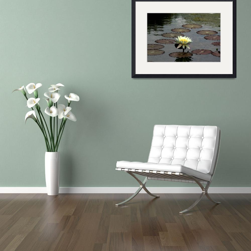 """Water Lily 5&quot  by JBCPhotoDesign"