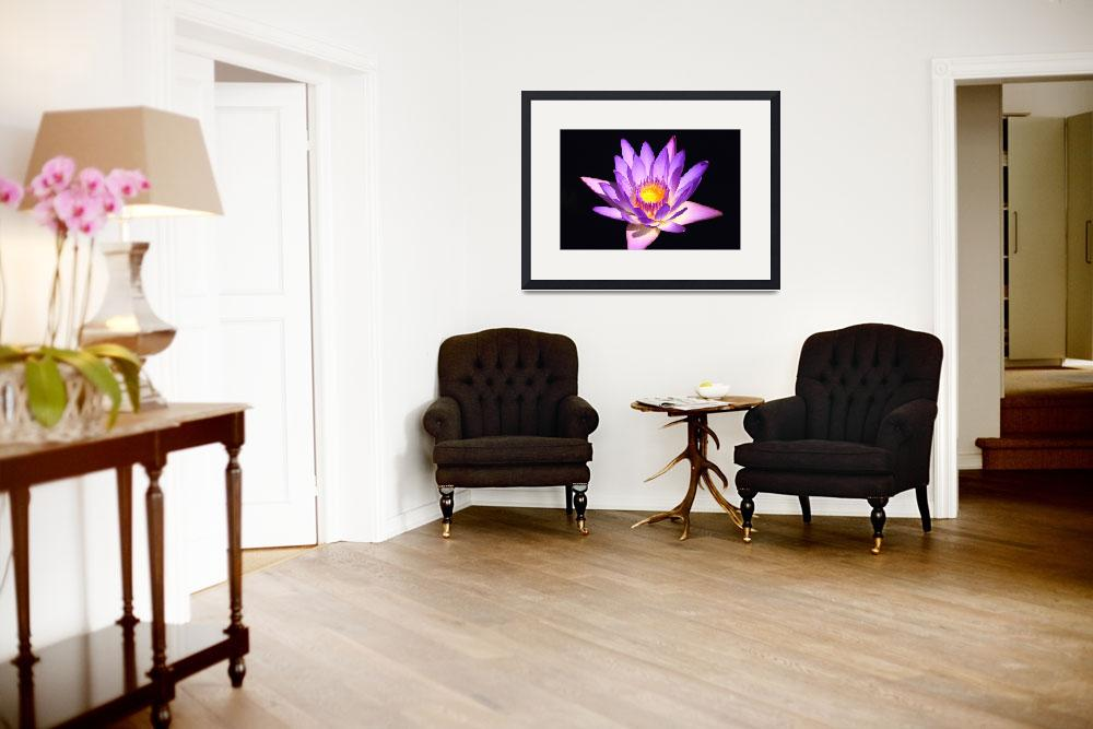"""""""Lavender Water Lily 4&quot  (2009) by FordLou"""