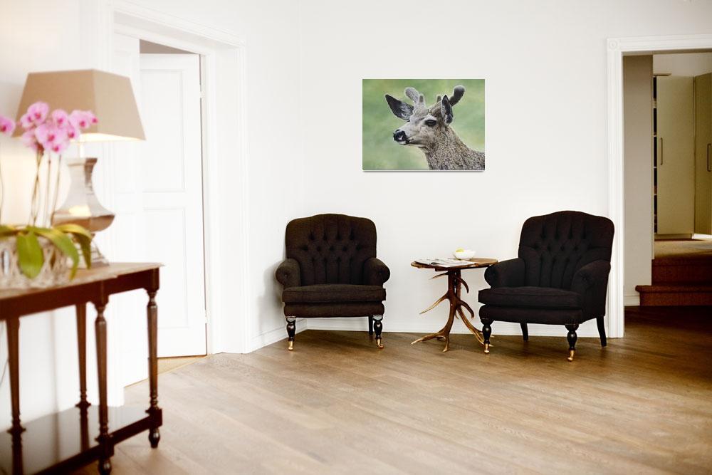 """""""Mule Deer In Velvet&quot  by artlicensing"""