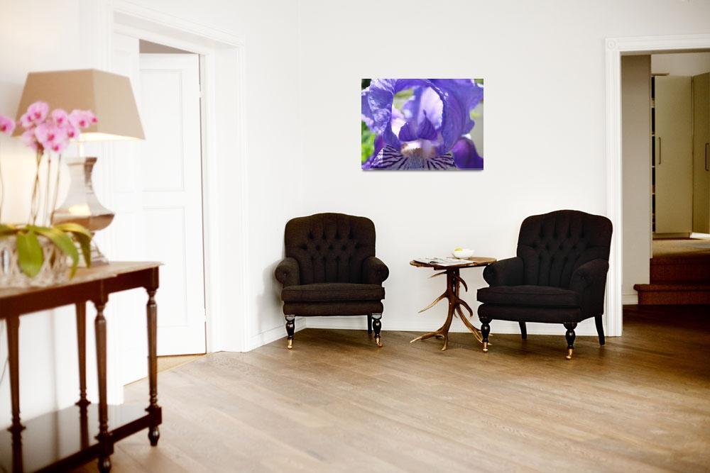 """Irises Art Flower Purple Close Up 17 Irises Prints""  (2009) by BasleeTroutman"
